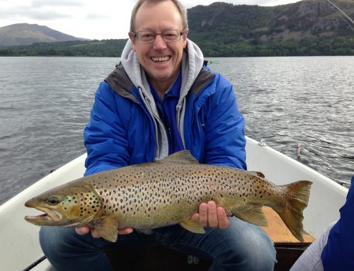 Wild Brown Trout Derwentwater