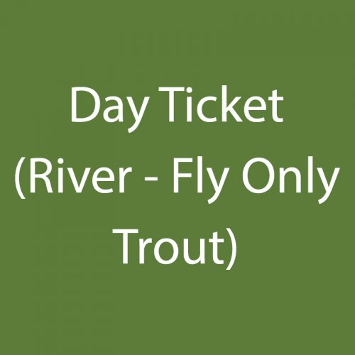 Day Ticket (River – Fly Only Trout)