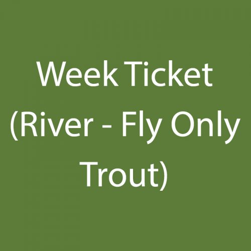 Week Ticket (River – Fly Only Trout)